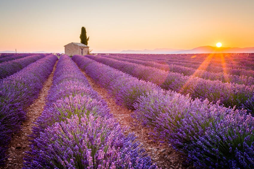 Our Ultimate Guide to Provence