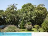 Almond tree in the garden0