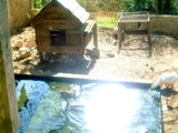 Sun on the pond.0