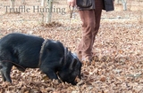 14-Truffle Hunting.jpg0