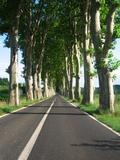 The Road To Belarga0