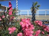 flowers0