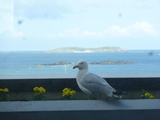 Bird in Balcony0