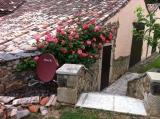 Beautiful Roses area